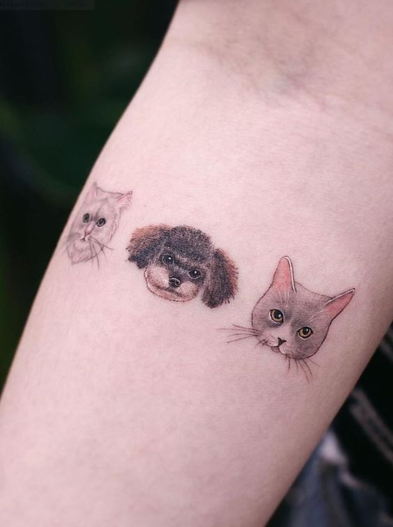 Small but colourful pet tattoos